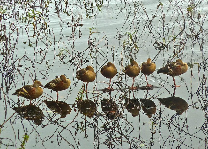 Ducks Row Polycom
