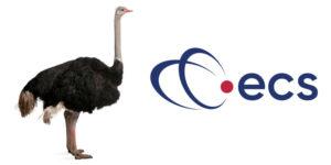 ECS-Contact-Centre-ostrich